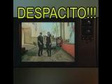 Chuck Norris Despacito