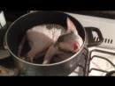 Zuzu Cornish Rex Potted Cat