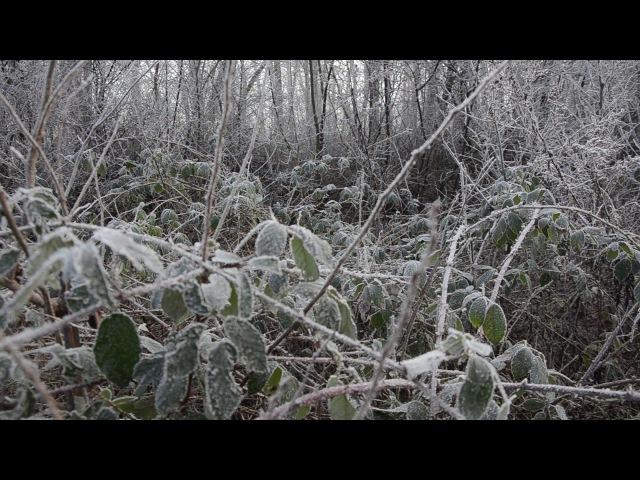 Ежевика с зелеными листьями в январе