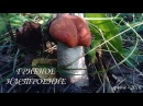 🍄ГРИБЫ в нашем лесу ❧ ГРИБНОЕ НАСТРОЕНИЕ 🍄