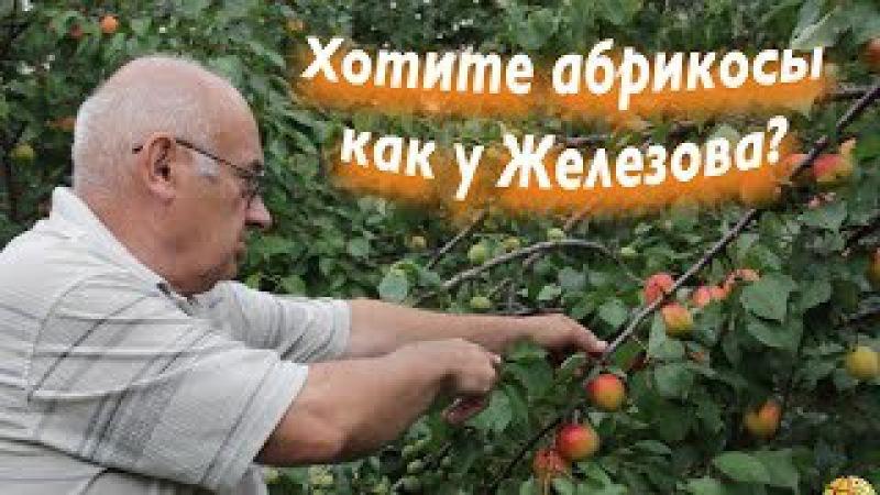 Абрикосовый Рай по методике садоводства Валерия Железова