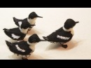 DIY Needle Felting a Marbled Murrelet Bird Tutorial for Beginners ( Stop Motion Animation )