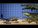 Crocodile species size comparison
