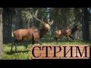 TheHunter Call of the Wild Чертовщина в Хиршфельдене СТРИМ