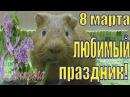 8 марта 8 марта поздравление Веселое поздравление Поздравление от свинок Елена и зверята