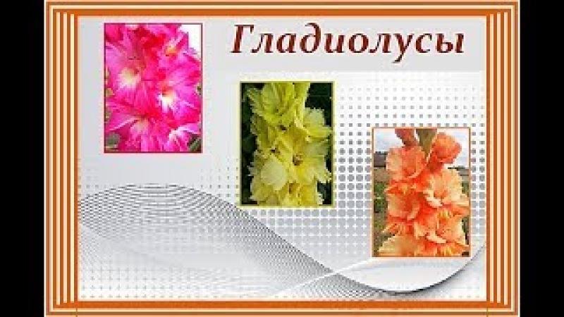 Мои ГЛАДИОЛУСЫ. Весна 2018 года ⫷◆⫸ My Gladiolus