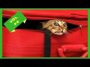 Смешные животные! Приколы с животными до слез ютуб видео приколы 2017 Смотреть подборку бесплатно 4