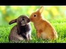 7 причин обзавестись кроликом