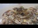 Часть ролика Фантазии моря Автор Владимир Добрынин соло на саксофоне Дмитрий Белокрылов
