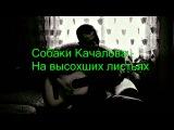 Собаки Качалова - На высохших листьях (кавер 209)