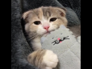 National cat day in japan - instagram@ami____5