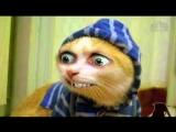 Лучшие Приколы с Котами и Кошками и Другими Животными 2017 Эксклюзивно для ВК #1