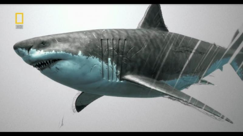 Доисторические хищники/Prehistoric Predators. Акула-чудовище/Monster Shark