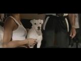 Его собачье дело — Русский трейлер (2017)