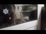 Кот подошел к двери и начал кричать «Открой мне».