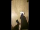 Фокус с мячом