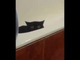 Кот скрылся в ванной с ворованной рыбой (6 sec)