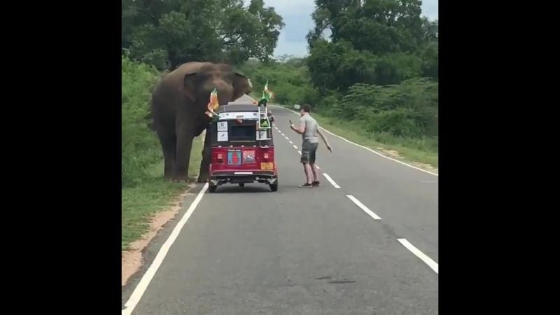 Слон перевернул мотороллер