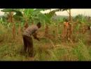 BBC «Виртуальная революция 1. Великое социальное равенство» Научно-познавательный, исследования, 2010