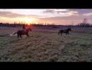 Я на Басе Басурмане и Настя В на Памире Померанце в поле на закате солнца галопом Щеглово 05 11 2017