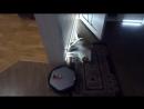 Ленивый кот и робот-пылесос arte