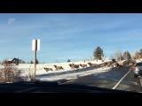 Herd of elk crossing road