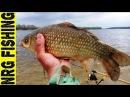 Рыбалка на карася Фидер 2017 открытие NRG FISHING