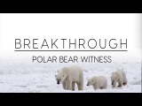Breakthrough Polar Bear Witness