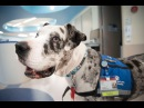 Therapy dogs visit patients, staff and ice cream counter
