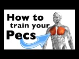 How to Train your Pectoralis major &amp minor (+15 gym exercises)
