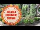Как правильно посадить хвойники Основные ошибки 🌲 Полезные Советы садоводам от hitsadTV