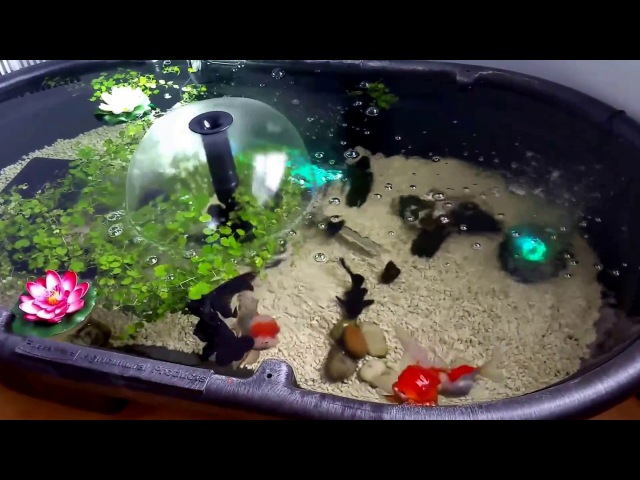 Small Indoor Goldfish Pond