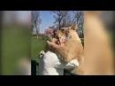 Встреча львиц с выкормившей их женщиной спустя 7 лет разлуки