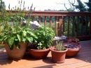 Комнатные растения на ОТКРЫТОМ ВОЗДУХЕ Можно ли выносить как ухаживать