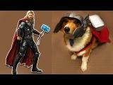 Супер герои в реальной жизни как собаки - Тор Бэтмен Супермен Человек Паук Халк Чудо женщина