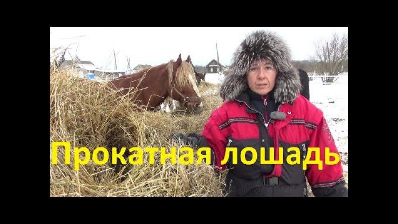 Как подружиться с прокатной лошадью