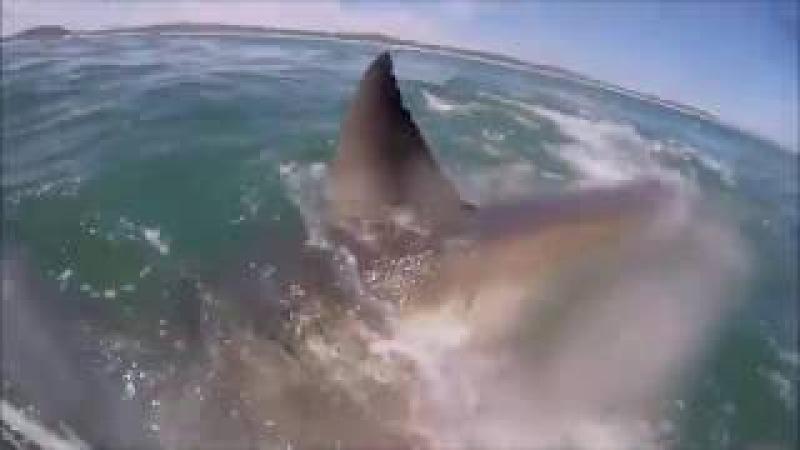 Белая Акула Южная Африка
