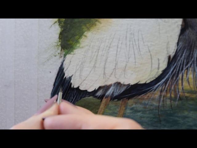 Как нарисовать акварелью птиц