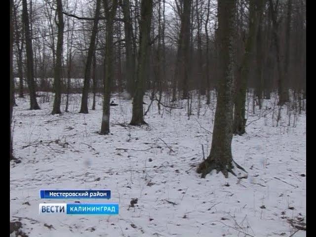 В Нестерове объявили бой чёрным лесорубам