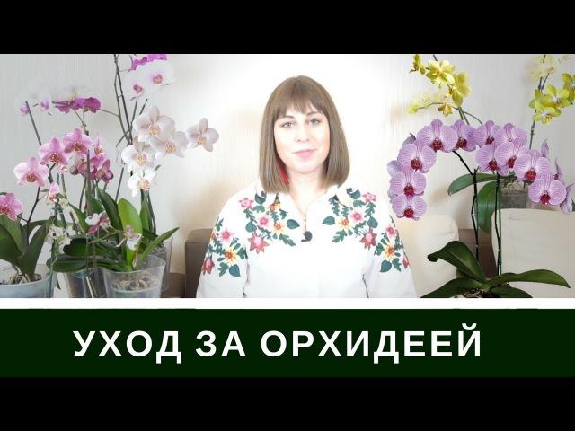 Уход За Орхидеей Фаленопсис: Мой Удачный Опыт