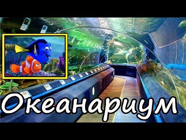 Океанариум Планета Нептун Спб Куда сходить с детьми в Петербурге 1 день