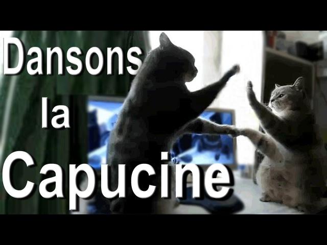 DANSONS LA CAPUCINE - PAROLE DE CHAT
