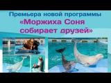 Премьера новой программы в дельфинарии на Крестовском