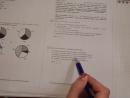 ОГЭ химия. Решение заданий по ОРГАНИЧЕСКОЙ химии.