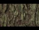 Отборочные этапы конкурса «Снайперский рубеж» АрМИ-2018 на полигоне Хмелевка