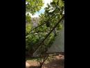 Для экскурсий делают кокосовые ириски