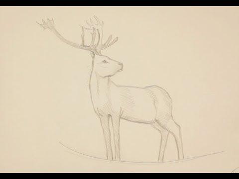 Как нарисовать оленя поэтапно простым карандашом начинающие