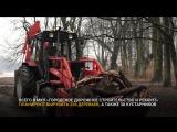 В Южном парке Калининграда вырубают деревья