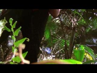 Brazil jungle by antonio da silva