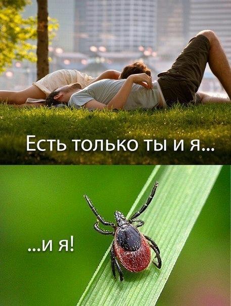 Фото №456254581 со страницы Люси Бушуевой